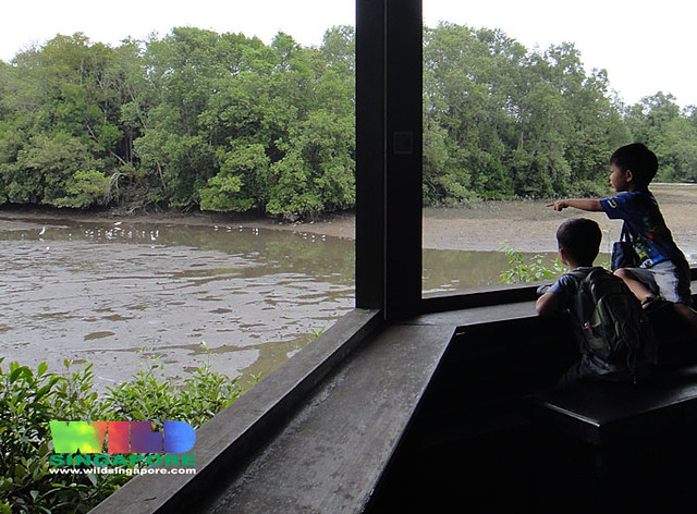 Kids looking at shorebirds at Sungei Buloh
