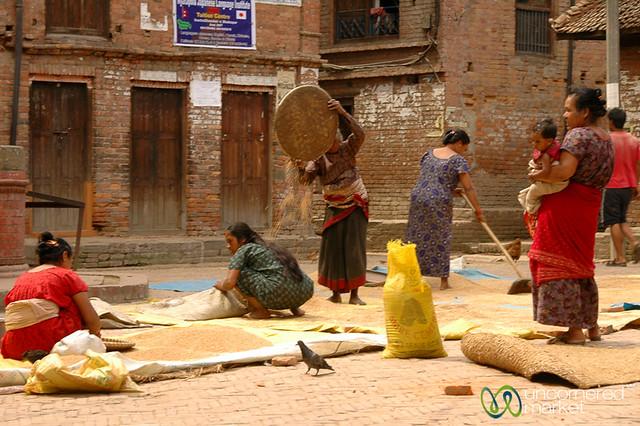 Harvest Time in Bakhtapur, Nepal