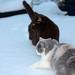 Small photo of Abenteuer Schnee