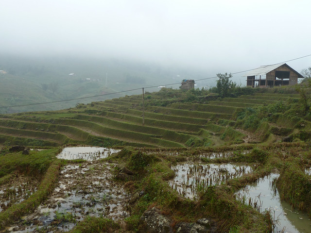 Ta Van Village rice terrace padies