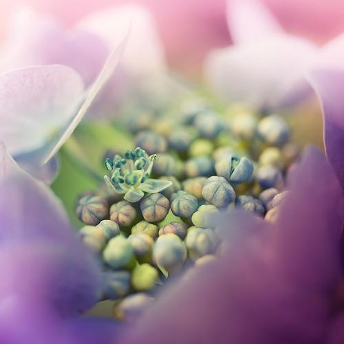 Nature Macro Flower