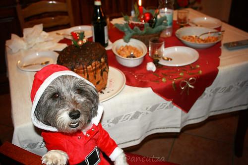 cane divertente vestito da babbo natale