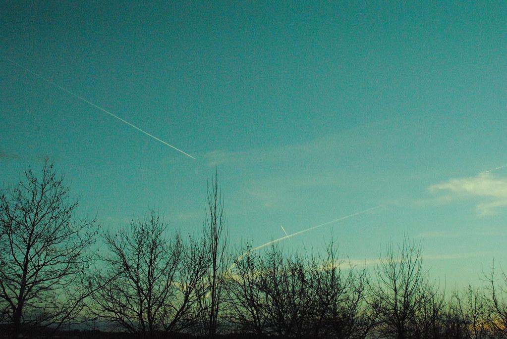 tumblr, images, photos, sunrise, light, nature, trees, blue skies