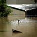 Hills Hoist Underwater - Brisbane Floods 2011 by teybannerman