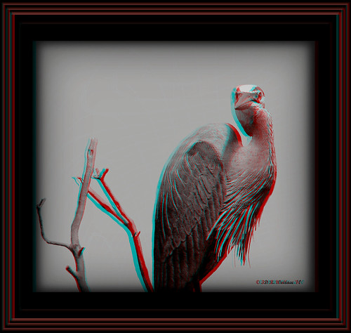 brian wallace brianwallace art ewf eastonwaterfowlfestival carving sculpture fineart detail decoy depth chacha anaglyph 3d stereo stereoscopy stereoscopic stereographic stereoimage stereopicture indoors inside artpiece gallery beautiful easton md maryland nature skill expensive grayscale bw blackandwhite monotone heron waterfowl bird