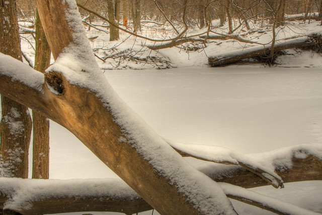 hdr miami woods forest preserve, snow and cold january 22, 2011 12 4x6 bp