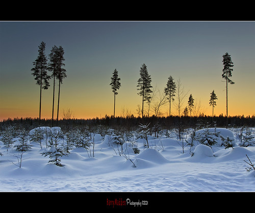 trees winter sunset sky sun snow cold field forest suomi finland landscape countryside afternoon freezing talvi lappeenranta