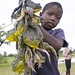 Young Boy Selling Frogs, Ongula, Namibia by Eric Lafforgue