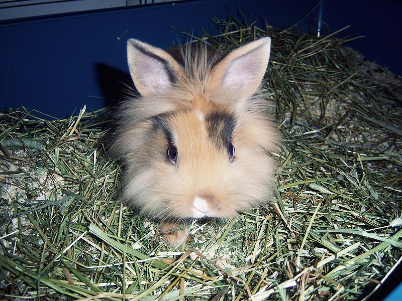 Oliver, 10 weeks.