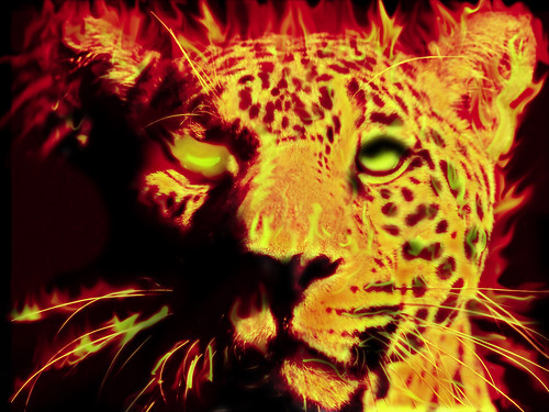 jaguar-fire