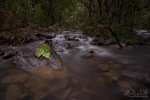 bw river leaf stream slowshutter tamannegara endaurompin