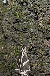 Petaloudes (Valley of the Butterflies) képe. geotagged griechenland grc dodekanisou epánokalamón kalythies geo:lat=3633407538 geo:lon=2806382337