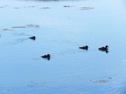 iceland nouhailler tripfromstykkishólmurtoflatey