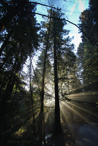lifelover4 canon t2i 550d 1020mm 130 f35 redwood trees canyon california ca usa fog mist oakland huckleberry pinehurst efs1022mmf3545usm circularpolarizer sanleandrocreek sequoiasempervirens stickneydesign rays explore explored interesting interestingness ebparksok crepusculars californiatnc11 hike hiking nature outdoors ebrpd hughstickney