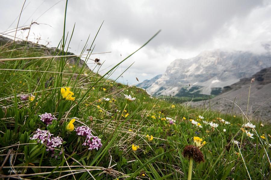 Tuenno, Trentino, Trentino-Alto Adige, Italy, 0.003 sec (1/320), f/8.0, 2016:07:01 11:03:42+00:00, 11.5 mm, 10.0-20.0 mm f/4.0-5.6