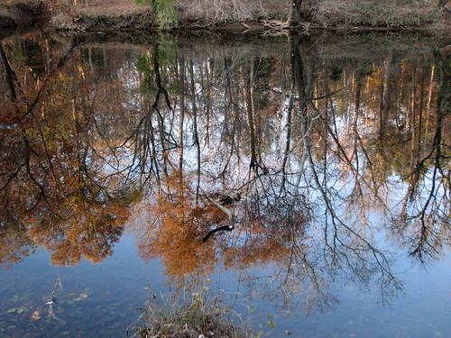nc naturepreserve pittsboro tlc whitepines