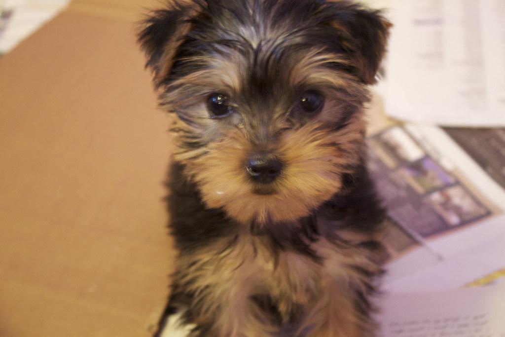 my pupppy <3