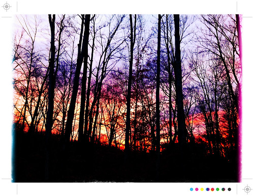 trees sunset white haven forest pennsylvania poconos