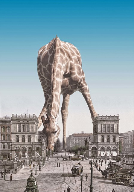 giraffe, city, photo, manipulation