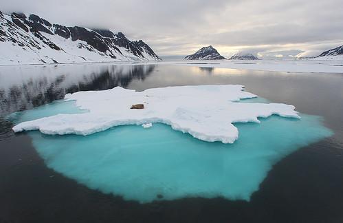 ice berg svalbard walrus spitsbergen