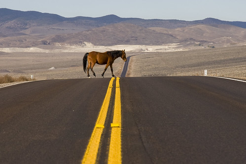 Horse Xing ( free range horse wandering through the Nevada desert) by dirk huijssoon