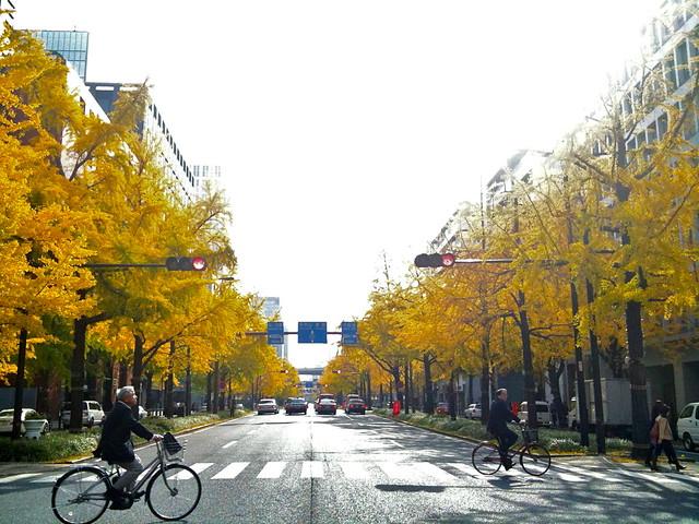 秋の御堂筋。