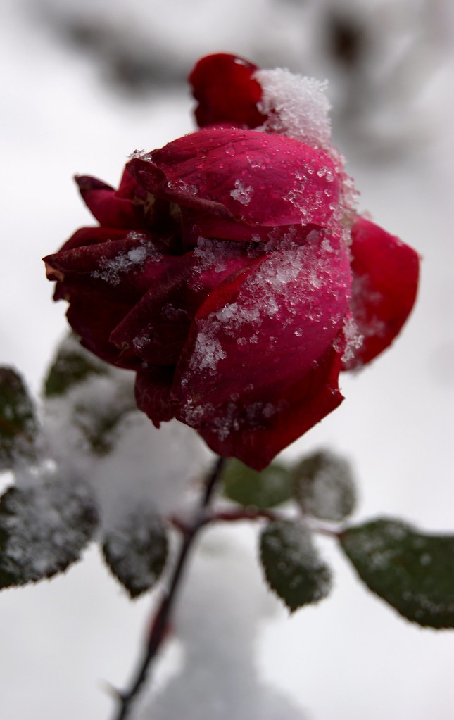 White winter hymnal flickr photo sharing
