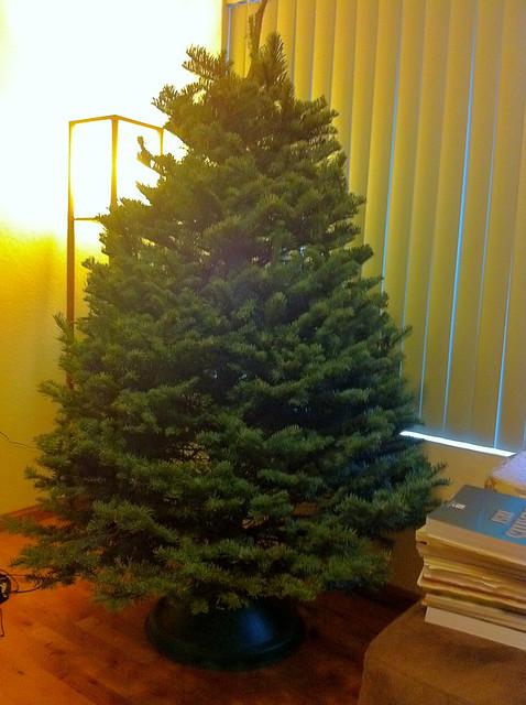 dicas comprar pinheiro natal natural nos EUA