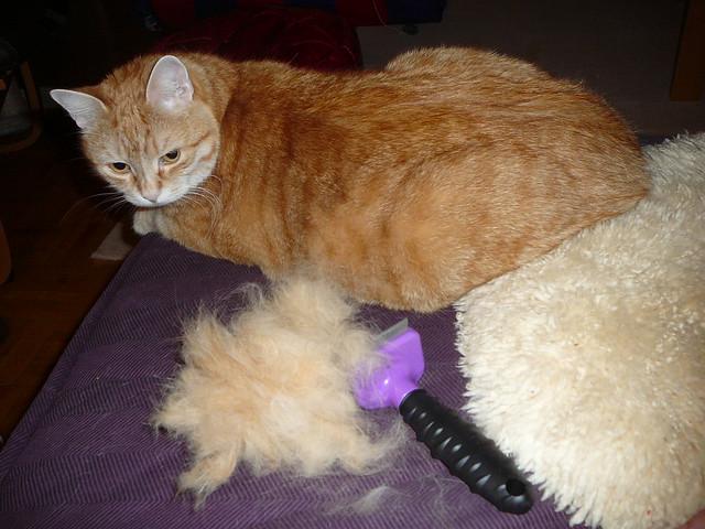 Furminator Deshedding Tool For Cats Long Hair Small