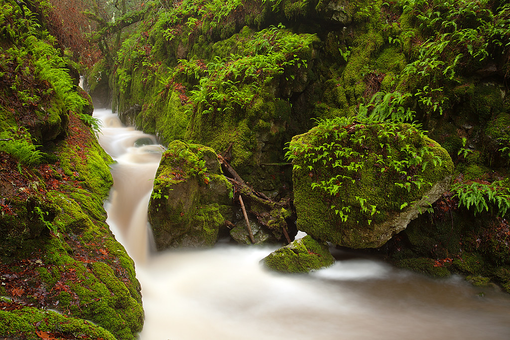 Fern Flow