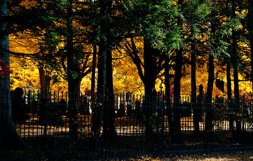 autumn trees usa cemetery boston fence ma colorful unitedstates massachusets