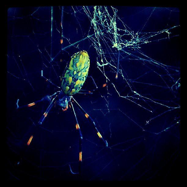 spider web / CAMERA:PEN E-P2 / SOFT:Photogene app,Instagra