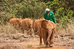 Baby elephants at the Elephant Orphange