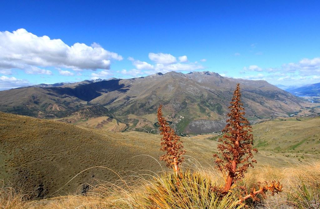 South Island Sub Alpine Landscape
