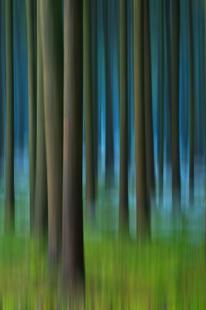 Blurry Schwarzwald