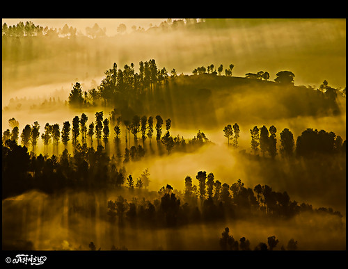 The dawn at Ketti valley (10 kms from Ooty, India)