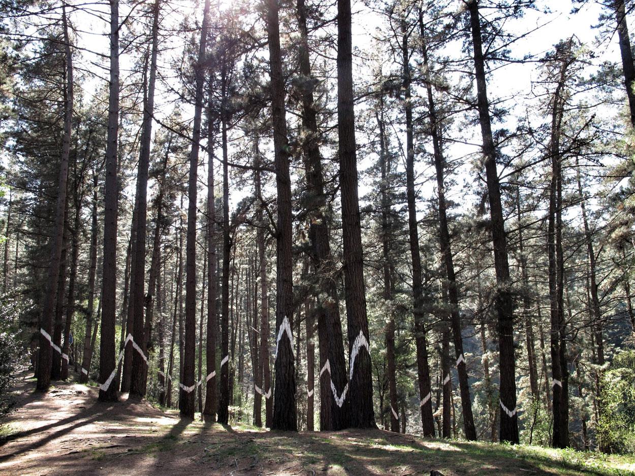 bosque de oma_rayo_tormenta_agustin ibarrola