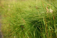 The lovely grass