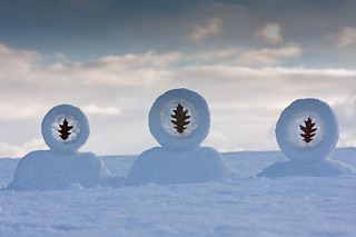 3 Ice Leaf Circles (3 Little Inuit in a Row)