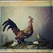 Still life with rooster by George Eastman House