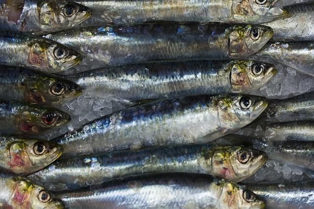 pescado online