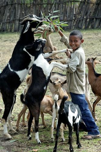 SLP field trip boy feeding goats