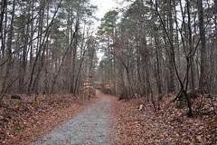 Duke Forest - Trail I - 044