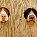 Peek-a-Boo by dakotawinters