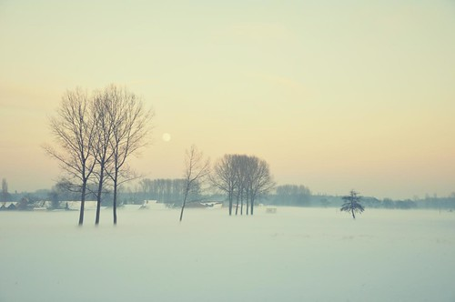 morning winter snow cold tree field sunrise