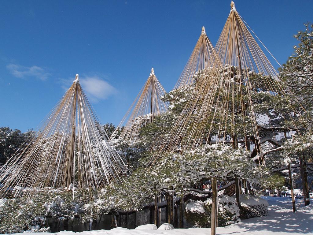 雪吊り / Snow hanging