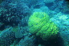 Great Barrier Reef_4513
