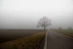prairie, fog, horizon, highway, field, sunlight, road, plain, nature, haze, rural area, mist,