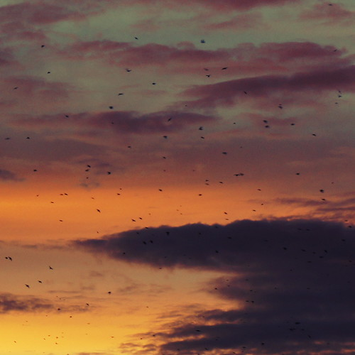 sunset sky bird birds clouds dusk philippines flock manila tropicalsunset