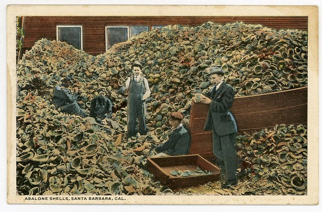 Postcard of men with a mountain of abalone shells